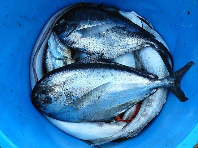 frischer Fisch zum Fang bereit